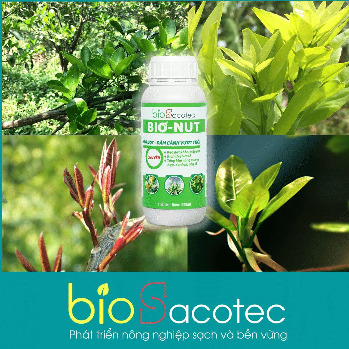 Dinh dưỡng hữu cơ Bio Nut - sản phẩm kéo đọt khoẻ, mập đọt, kích thích ra rễ, tăng khả năng quang hợp, xanh lá, dày lá,...