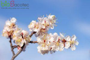 spring flowers bloom fruit apricot tree 170532 1456