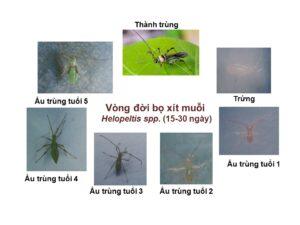 Vong doi BXM