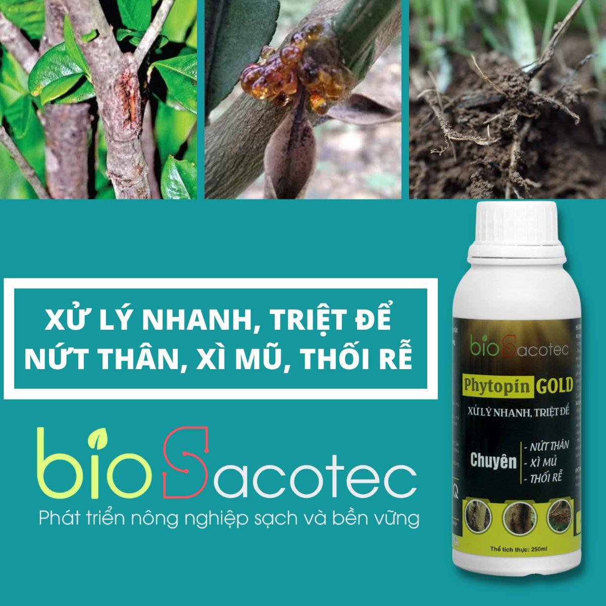 Chế phẩm sinh học Phytopin Gold - phòng trừ bệnh nứt thân, xì mủ, nấm hồng, thán thư, đốm lá