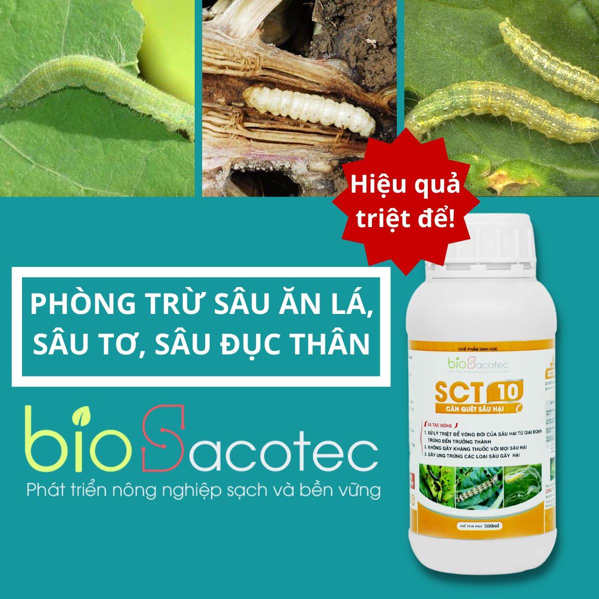 Chế phẩm trừ sâu sinh học SCT 10 - Phòng trừ sâu ăn lá, sâu tơ, sâu đục thân